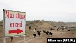 Указатель местности для перегона скота рядом с автомобильной трассой в Туркестанской области. Иллюстративное фото.