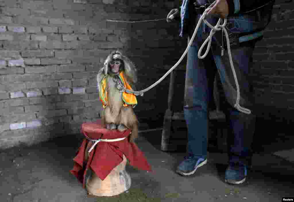 Приматов ждет тяжелый труд