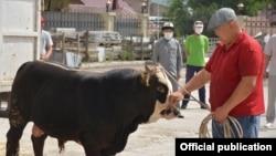 Принесенный в жертву бычок, 10 июля 2020 г. Бишкек.