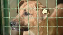 """Куче во кафез во стационар """"Вардариште"""""""