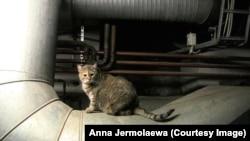 Один из эрмитажных котов Анны Ермолаевой