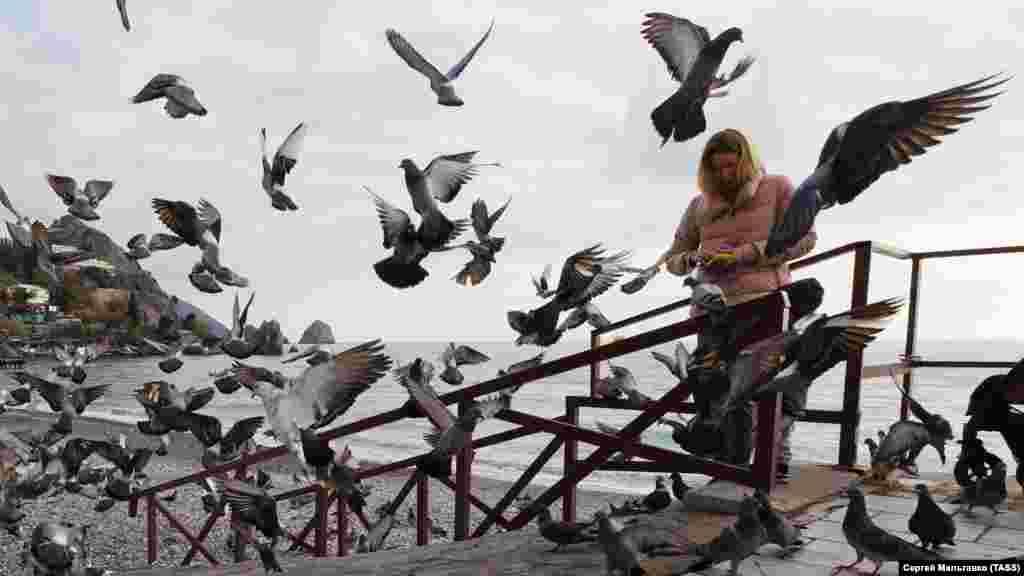 Вместо пляжников у моря засилье жаждущих обеда голубей
