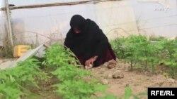 آرشیف، یک خانم تجارت پیشه در ولایت فراه