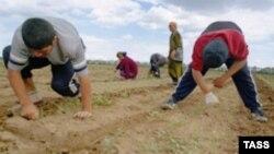18 жаштан 21 жака чейинки өзбек мигранттарынын оор абалын азыр бийликтер териштирип жатышат