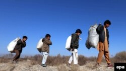 آرشیف، شماری از اطفال در حال جمعآوری هیزم در ولایت هرات
