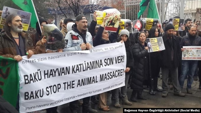 İstanbulda Bakıda itlərin öldürülməsinə etiraz