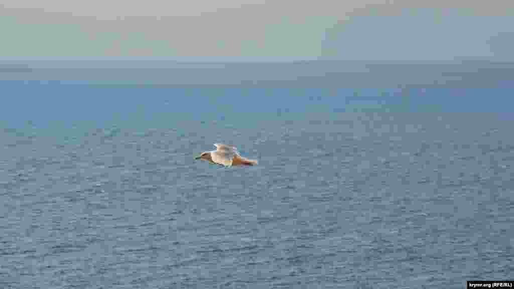 Чайка летить у височині