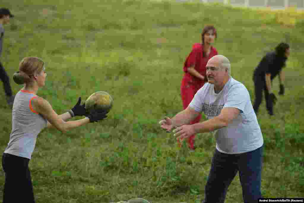 Belarusian President Alyaksandr Lukashenka takes part in harvesting watermelons at his garden on the outskirts of Minsk. (BelTA/Andrei Stasevich)