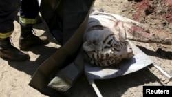 Белый тигр, загрызший человека в центре Тбилиси, 17 июня 2015 года