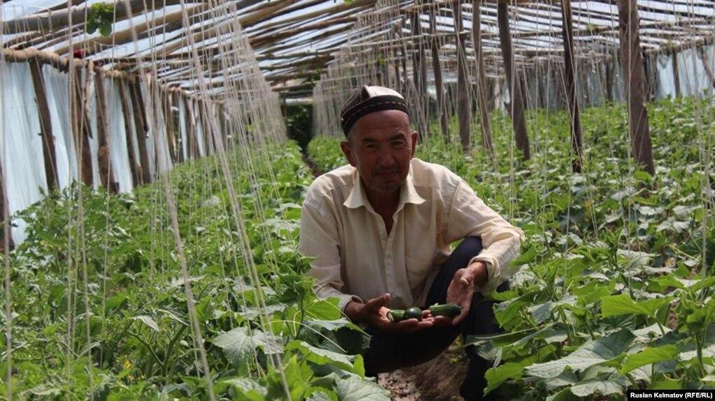 По оценке Соцфонда, в Кыргызстане на одного пенсионера приходится 1,2 работающих человека. В соответствии с рекомендациями Международной организации труда, на одного пенсионера должно приходиться не менее 3 плательщиков