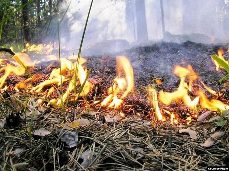 фото с gdb.rferl.org