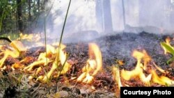 Лясны пажар
