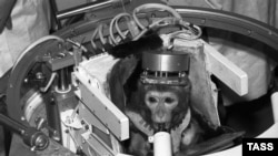 Soviet monkey Dryoma went up into space in September 1987, before being presented to Cuban leader Fidel Castro.