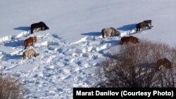 Кыргызстан. Нарын облусу, Жумгал району.