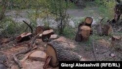 ჭიაურის ჭალის ტყეში მოჭრილი ხეები