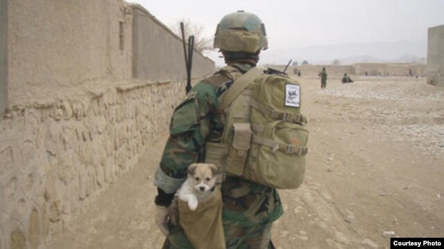 The Nowzad animal-welfare charity initially helped soldiers bring home dogs they had befriended in Afghanistan.