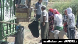 29-njy awgustda Türkmenistanda pagta ýygymyna girişilýär.