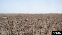 هور العظيم في ميسان يتعرض للجفاف