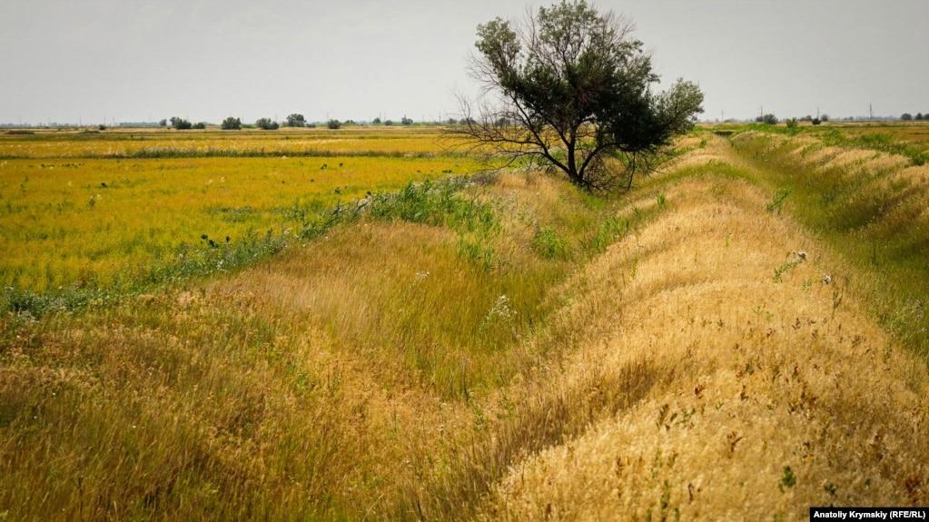 Здесь до 2014 года «по пояс» в днепровской воде Северо-Крымского созревал настоящий рис