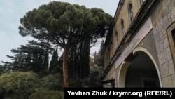 Особняк княгини Барятинской со всех сторон окружен старыми разросшимися деревьями