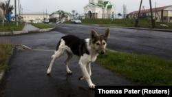 Бездомная собака, архивное фото