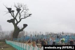 Стары дуб на могілках у Аброве