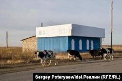 Скот гуляет на месте старого Муслюмово