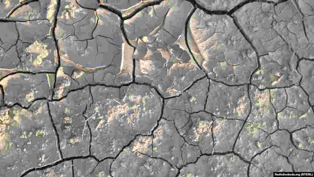 Незважаючи на засухи, південні чорноземи родючі