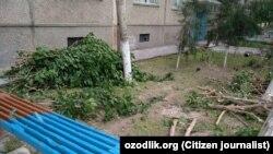 На протяжении последних нескольких лет почти во всех регионах Узбекистана происходит массовая незаконная вырубка деревьев.