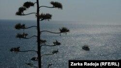Deti Adriatik