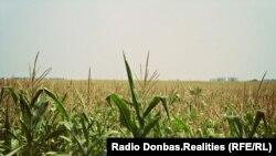 Продаж сільськогосподарської землі в Україні наразі офіційно заборонений