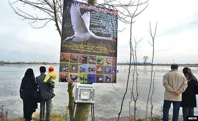 بنرهای تبلیغاتی برای شناساندن پرندگان مهاجر آبزی