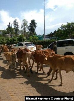 «Заторы» на вуліцах Найробі