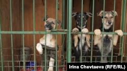Власти Москвы, как утверждают защитники животных, готовятся вывезти 12 тысяч бродячих животных из столичных приютов в Ярославскую область