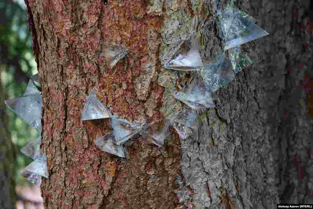 Первый экспонат на пути подъема — «Сомнительный симбиоз» Зои Фальковой. Работа отражает отношение к природе. Из безвредной для деревьев эпоксидной смолы художник изготовила маленькие пирамиды и прикрепила к стволу дерева. Они напоминают паразитов. Это аналогия с человечеством, которое наполнило Землю геометрией, несвойственной природе, но удобной для пользования.