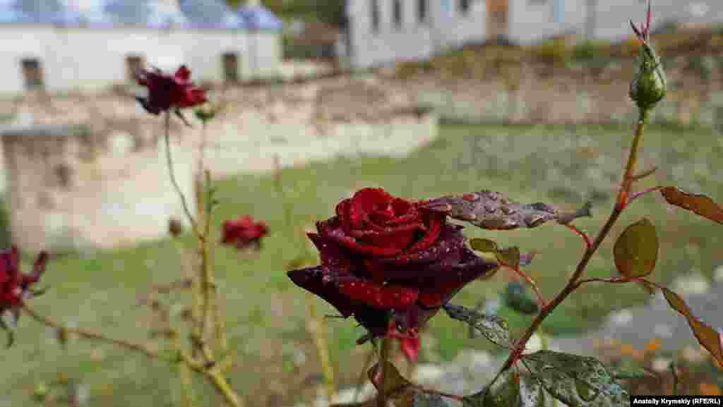 Цветник Девлет-Сарая омыло дождем