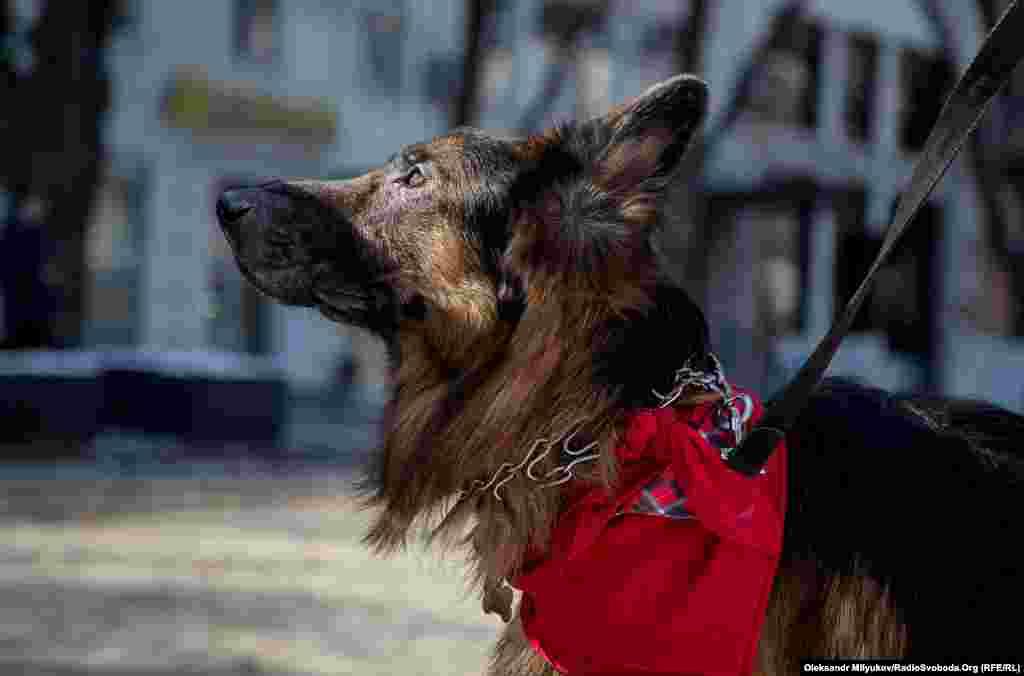 Фараон, такое имя указано в паспорте собачки, приехал в Одессу из Мариуполя.
