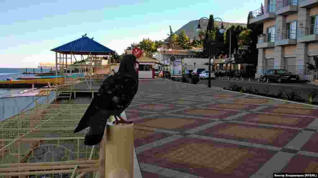 Редкие отдыхающие прогуливаются и кормят голубей