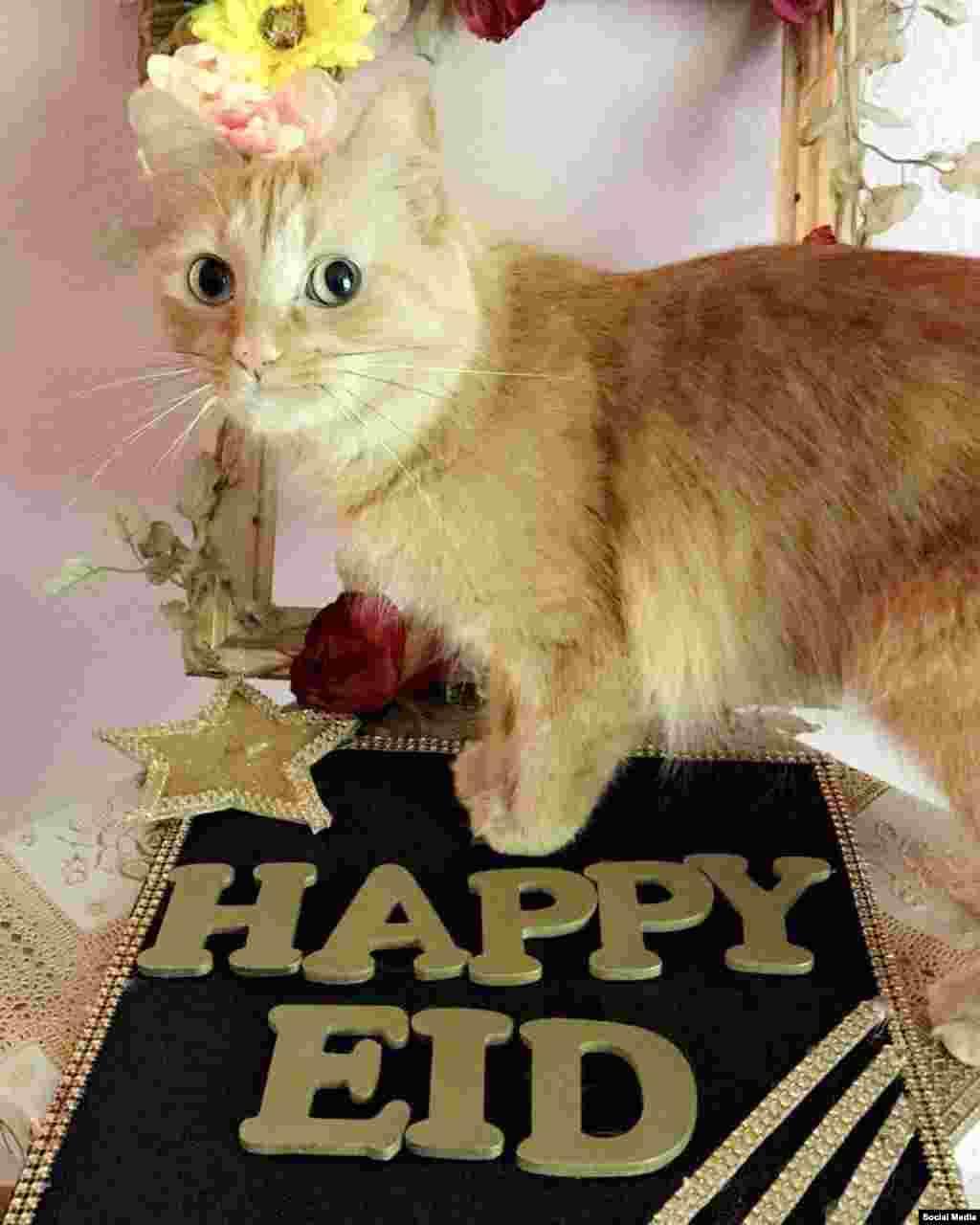Эта кошечка тоже желает мусульманам счастливого правздника