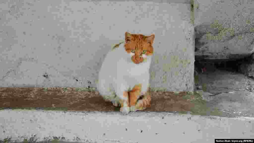 Этот севастопольский кот пытается укрыться от дождя