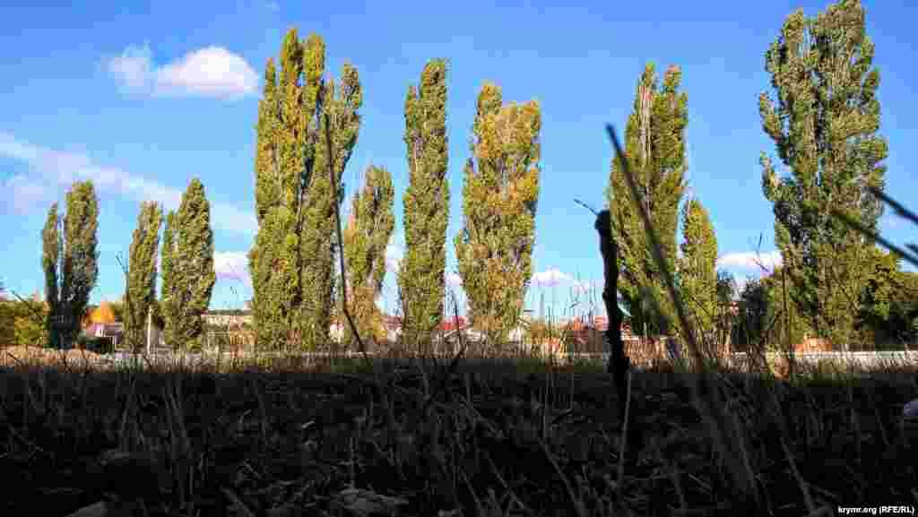 Багаторічні дерева опинилися в зоні будівництва