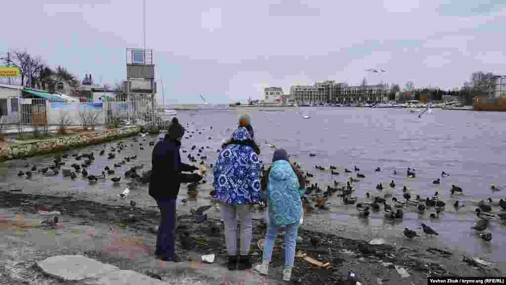 Севастопольці в бухті Омега годують качок і голубів