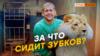 Как туристку из России покусали в Крыму? | Крым.Реалии ТВ (видео)