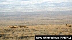 Алматы облысының бір көрінісі. 30 наурыз 2012 жыл. Көрнекі сурет