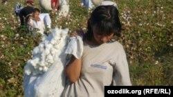 Özbəkistanda uşaq əməyi, 2011