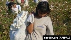Uzbekistan -- Child labor Uzbekistan, collecting cotton, 13Oct2011