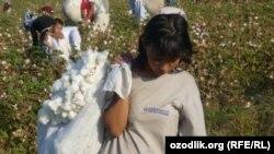 На хлопковых плантациях много работающих детей