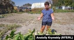 Жительница Перекопа демонстрирует погибшие листья овощей на своем огороде - 29 августа