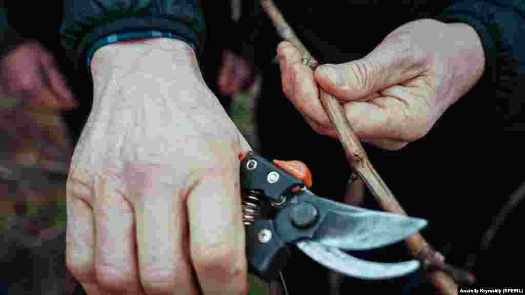 Лучшего обрезчика определяли по скорости и качеству обрезки 5 кустов технического сорта Каберне совиньон