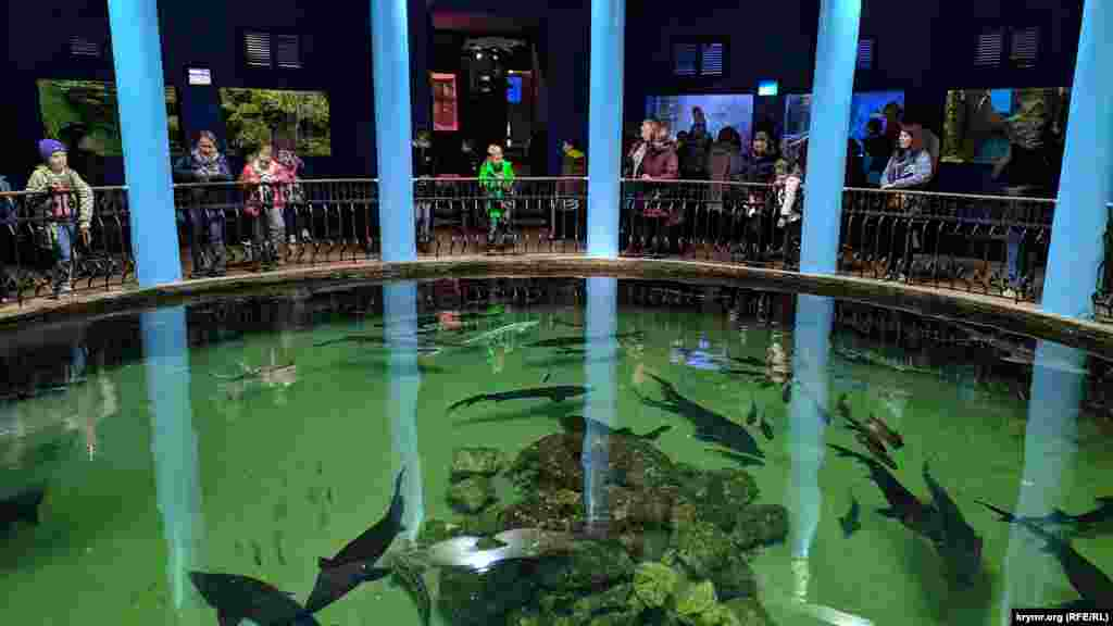 Посетители рассматривают осетров в большом бассейне